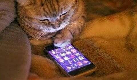 一緒に居る時に携帯ばかり弄る知り合い