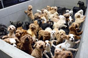 8平方mで犬猫50匹飼育…治療怠り注射もせず