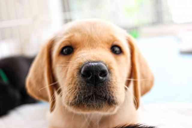 飼い主なら読んでおきたい「犬の十戒」と「猫の十戒」 | いぬのきもち・ねこのきもち