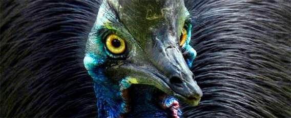 できれば避けて通りたい、世界10の危険な鳥 : カラパイア