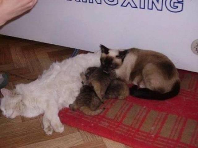 農家の納屋で発見された幼い4匹の子猫達。でもそれは普通の子猫ではありませんでした!