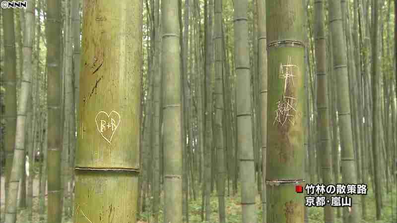 京都・嵐山の竹林 竹を刃物で傷つけ落書き|日テレNEWS24