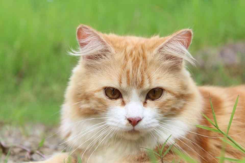外飼いはじつはストレスになる!外飼い猫を室内飼いにする方法まとめ | 猫になりたい~猫☆パラダイス~