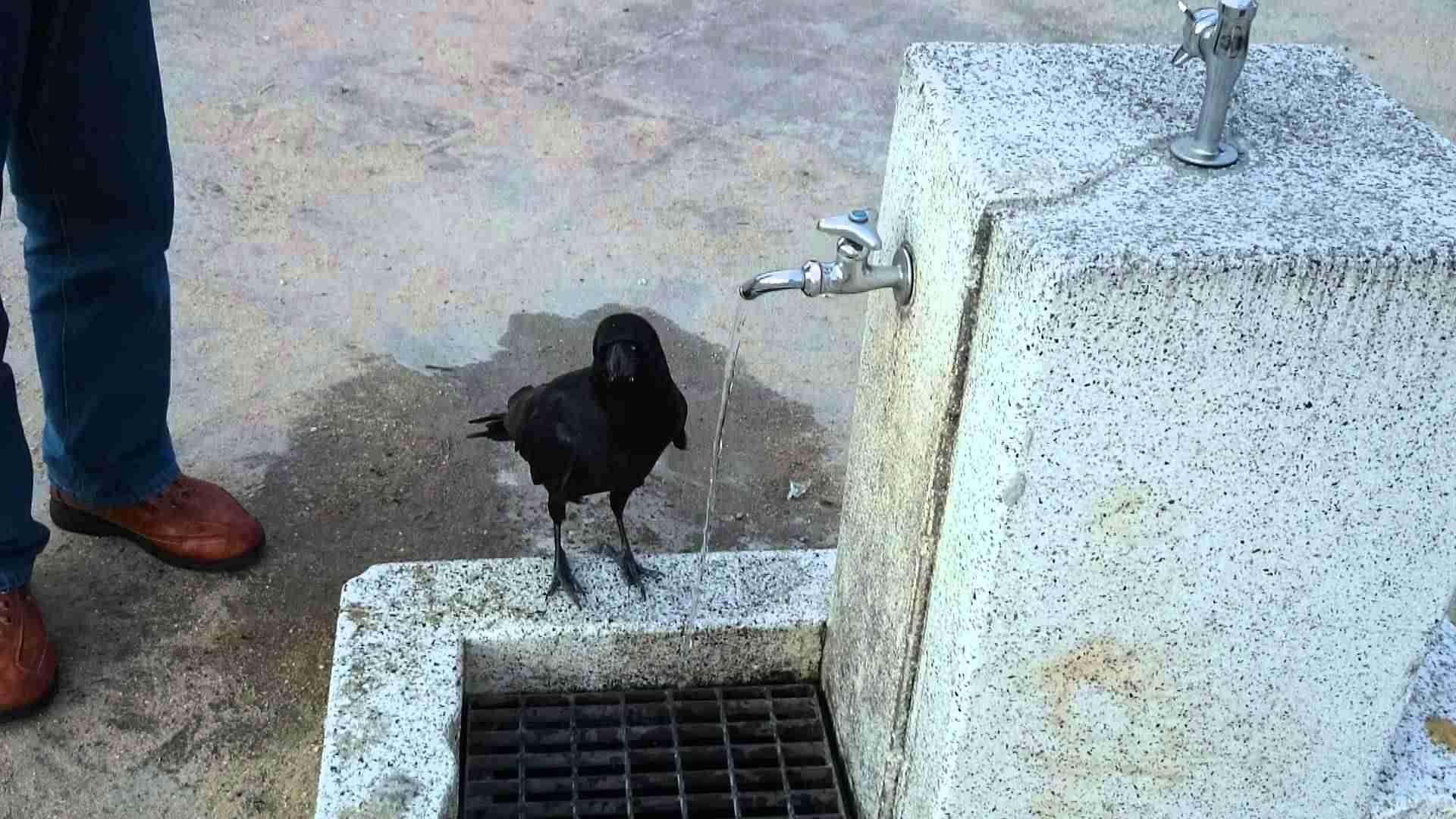 公園でカラスになつかれた It was tamed a crow in a park - YouTube