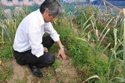 野菜盗難相次ぐ 被害者落胆 「栽培やめる」