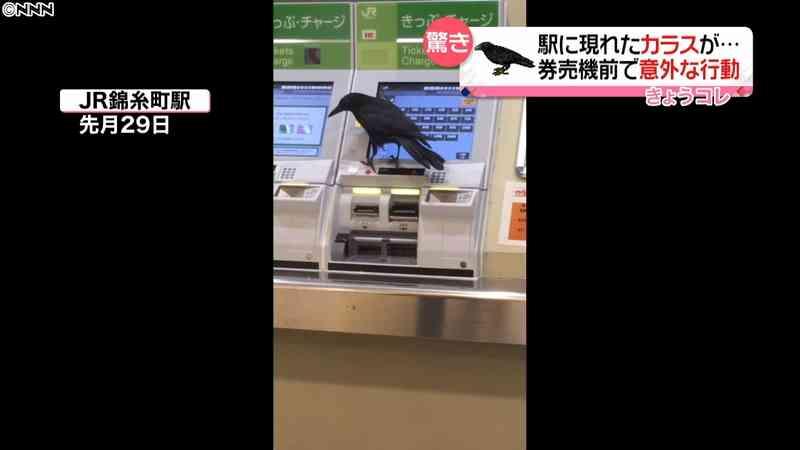 カラスが駅券売機で…驚き行動 注意喚起も|日テレNEWS24