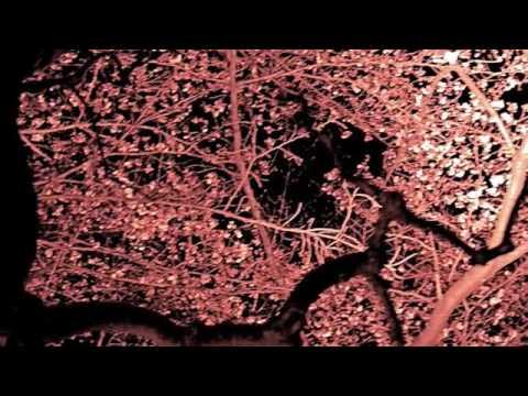 月の光 ドビュッシー - YouTube