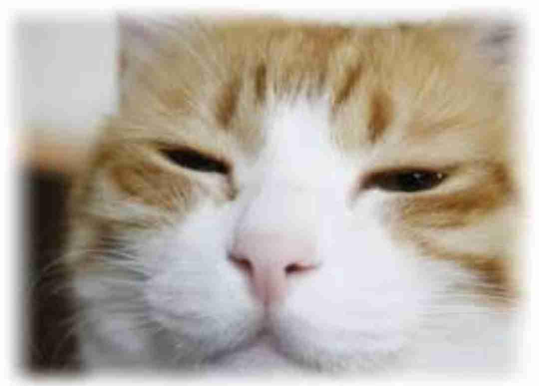 【まだまだ眠いニャ】眠そうな猫画像【おはよう】