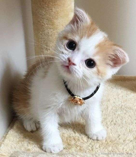 猫ちゃん完全室内飼いですか?