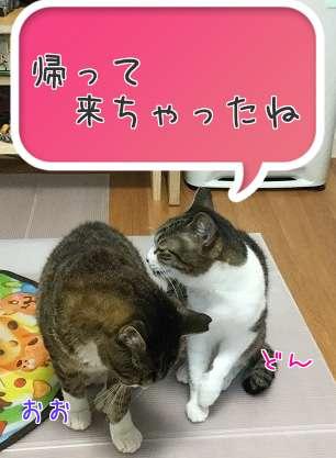 大阪わんだー帰ってにゃんだー | チョー オフィシャルブログ「きのう チョー あした」Powered by Ameba