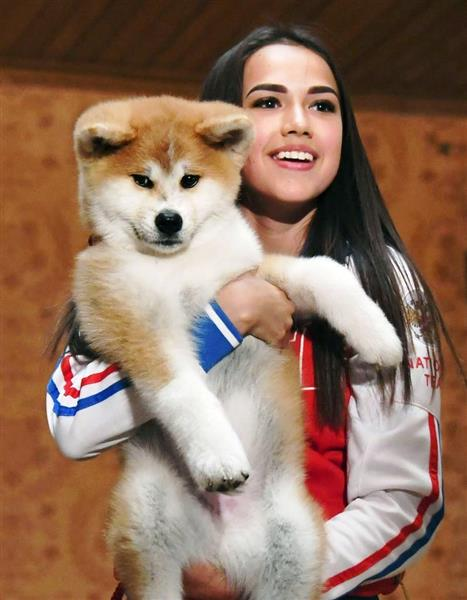 秋田犬「マサル」、先住猫「イリースカ」にほえる ザギトワ選手宅の犬猫同居を心配する声も  - 産経ニュース