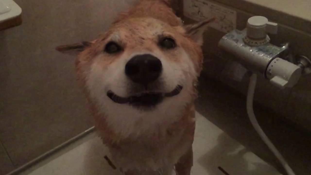 お風呂にはいるよ〜 - YouTube