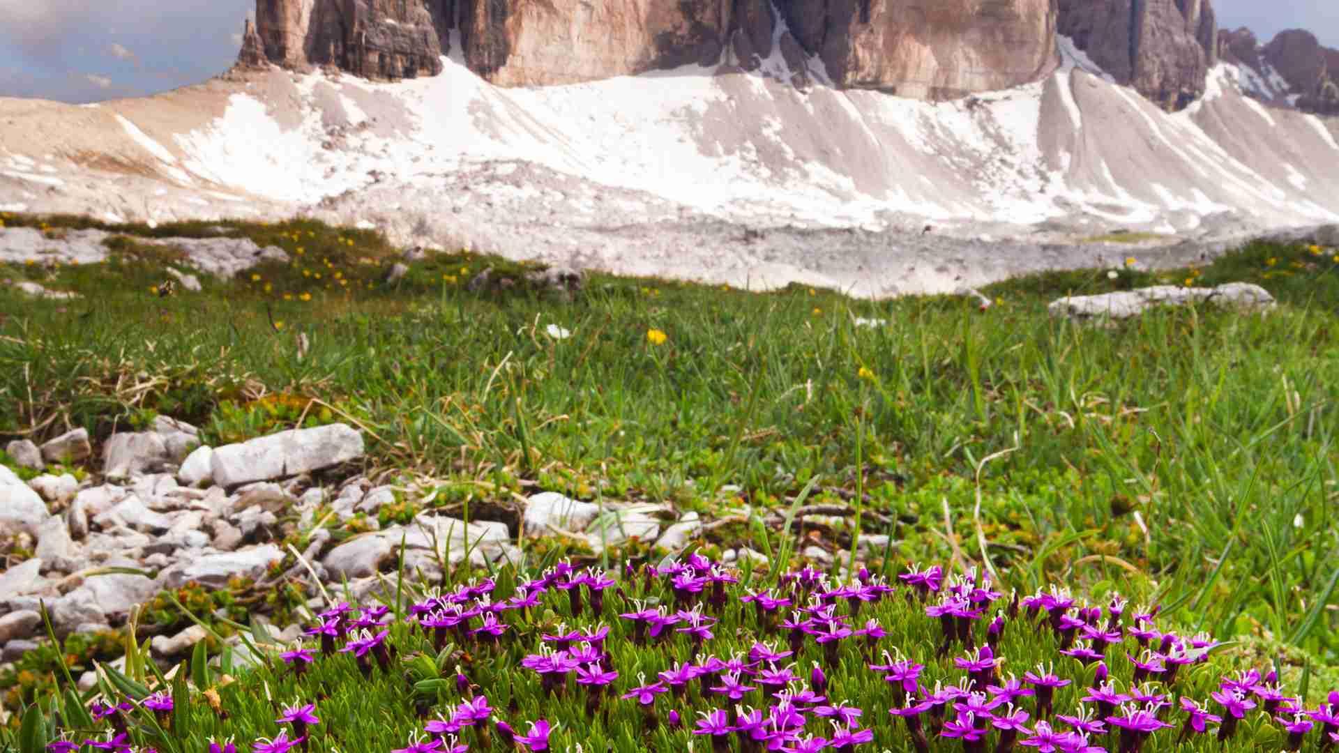 ヨーロッパ植物学の伝統が地球温暖化の深刻さを明らかにした。(西川伸一) - 個人 - Yahoo!ニュース