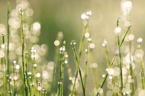 運気が下がっている時には植物でもわかる!魔除けにも良い植物 - Spotlight (スポットライト)