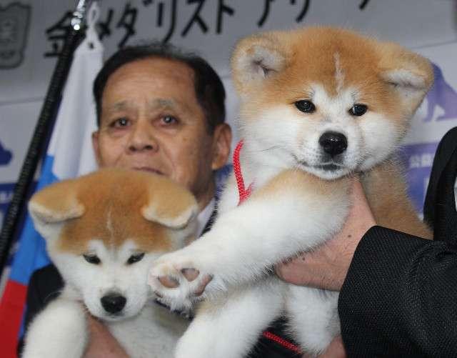 秋田県大館市でザギトワに贈られる秋田犬お披露目「まさに秋田美人です」