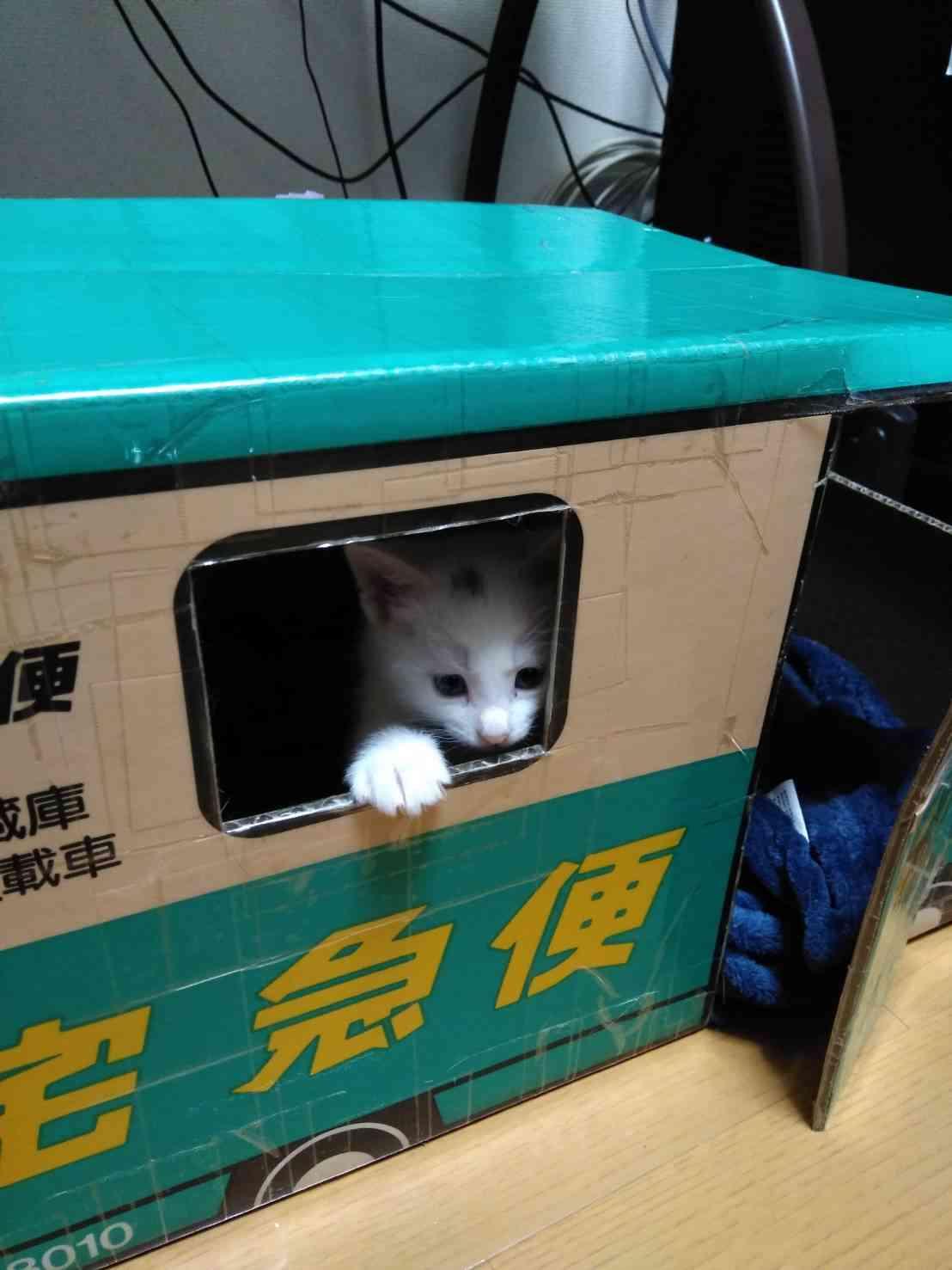 【新入りさん】先住猫と仲良くする方法