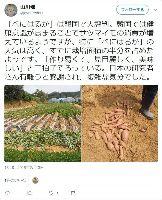 日本が開発したサツマイモ、韓国に流出して大人気!権利保持者の公的機関「手続きが大変」と登録を怠る | 保守速報