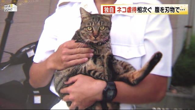 福岡市でネコ虐待相次ぐ 何者かに腹を切られる えさ置き場にナイフも 住民「気味が悪い」