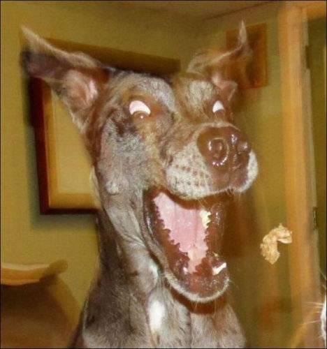 【画像】動物のいろんな表情