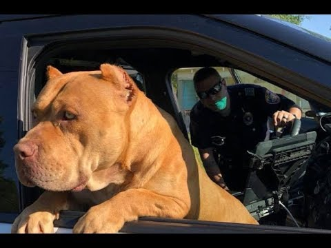 『凶暴な犬がいる!』と通報された犬。 警察官が駆け付ける驚きの行動に... - YouTube
