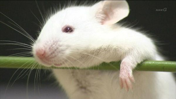 [閲覧注意]動物実験を人間で再現したパフォーマンスがものすごくリアルと話題に。 - NAVER まとめ