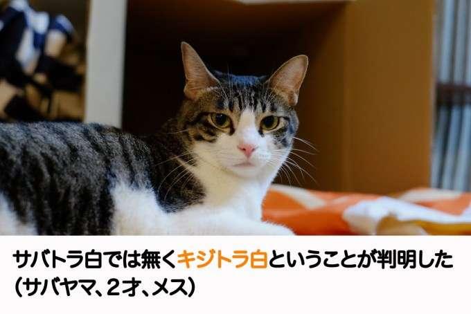うちの子自慢【ペット編】