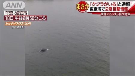 えっ?東京湾に「クジラがいる」 ビルの上から撮影(テレビ朝日系(ANN)) - Yahoo!ニュース