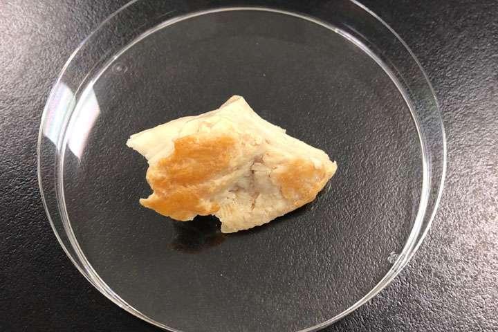 梅雨どきの「作り置き」、食中毒リスクにご用心 火を通した料理でも調理器具の菌が移って繁殖するおそれ