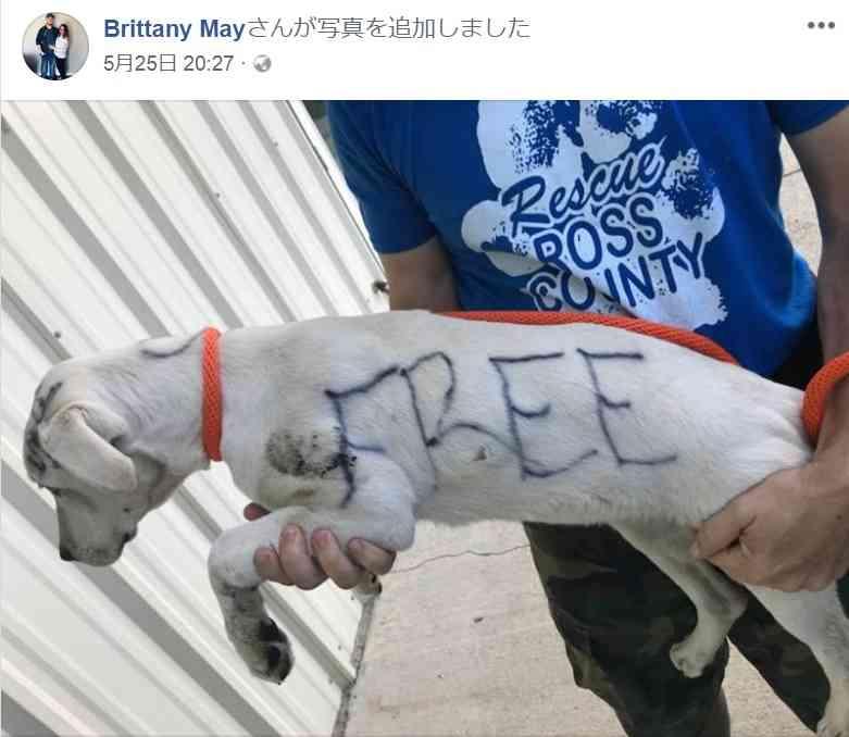生後5か月の仔犬の体に「タダ」と落書き 捨てた女逮捕される(米)