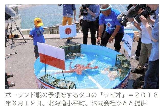 W杯日本戦すべて的中のハンパないタコ、すでに「ゆでだこ」となり出荷されていた…容赦ないって