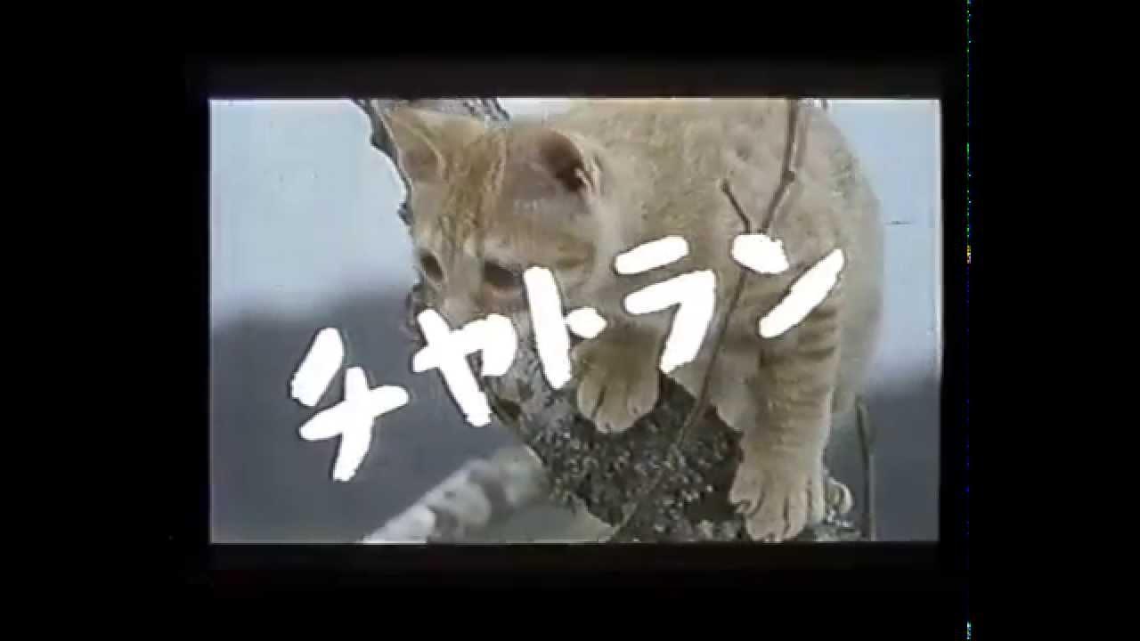映画予告編 子猫物語 - YouTube