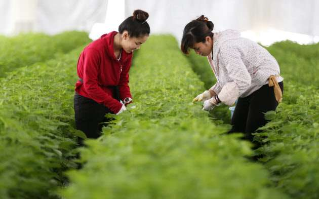 外国人、単純労働にも門戸 政府案「25年に50万人超」  :日本経済新聞