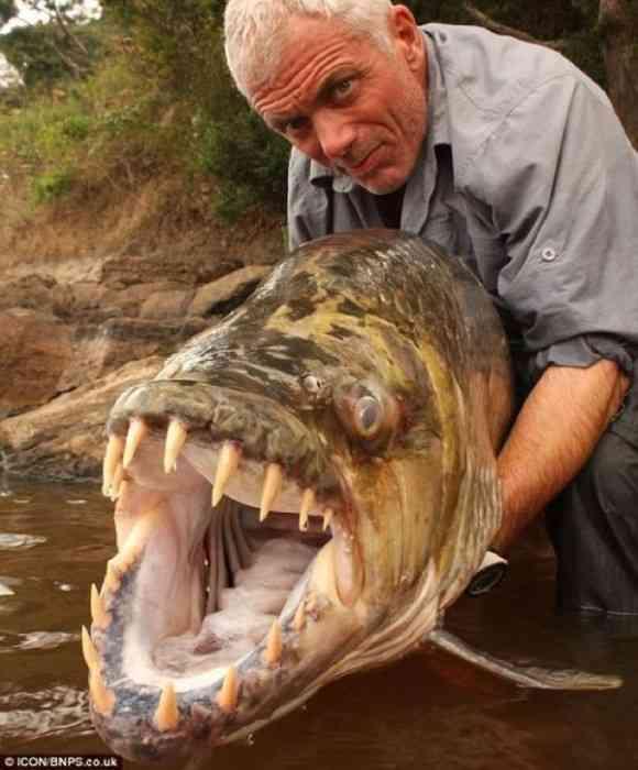 そのオーバーキルはなんなんだよ!人をも殺せる殺傷力を持つ水中に潜む10の魚 Part2 : カラパイア