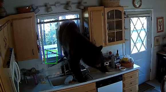 台所の窓から突撃してきたクマ、食料を奪い去って去っていく(アメリカ)