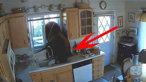ヨネスケじゃなくクマだった。台所の窓から突撃!隣の晩ごはんしてきたクマ、食料を奪い去って去っていく(アメリカ) : カラパイア