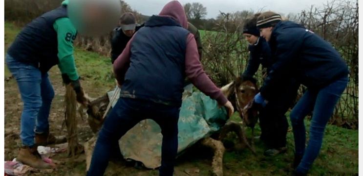 イギリスで増加する馬の不法投棄。ペット感覚で飼育、飼育費用や病気などの費用増で、捨て去る。英BBCは「英国の恥部」と批判。日本のペットブームにも警鐘(RIEF) | 一般社団法人環境金融研究機構