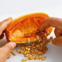 育てた野菜からタネをとる方法 | NHKテキストビュー