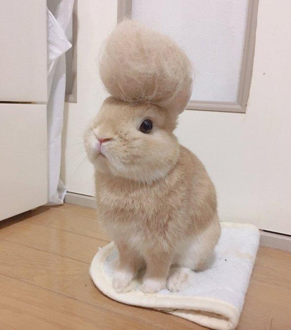 リーゼントでビシッ! キメっキメのウサギさん - ニュース - Jタウンネット 東京都