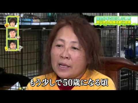 犬猫みなしご救援隊、被災地・福島で続ける活動とは? - YouTube