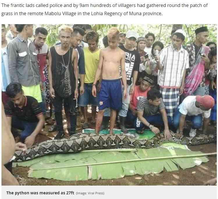 【海外発!Breaking News】8メートル超のヘビが54歳女性を丸飲みに(インドネシア) | Techinsight(テックインサイト)|海外セレブ、国内エンタメのオンリーワンをお届けするニュースサイト
