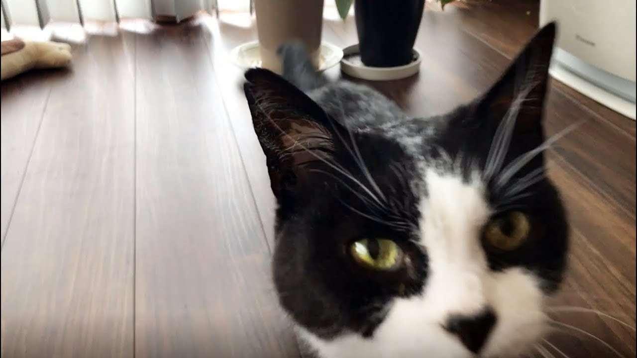 ある朝、猫との会話 Talk with a cat - YouTube