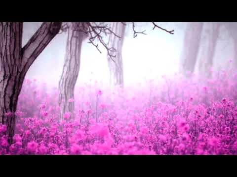 Deep Sleep Piano Instrumental Forest Healing music Meditation Relaxing・Soothing・Calming Music・Nature - YouTube