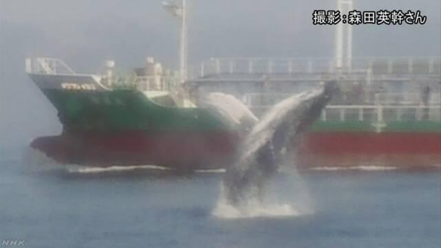 東京湾のクジラ 「地震の前兆か」という声に専門家は… | NHKニュース