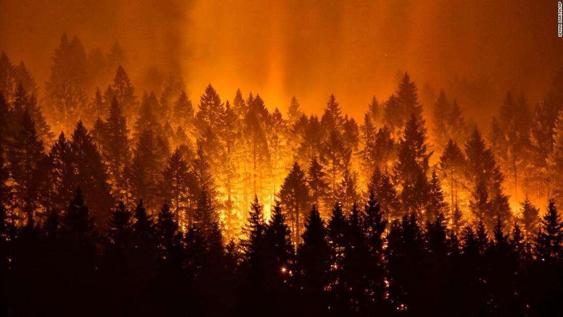 山火事で194平方キロ焼失、花火を投げ入れた少年に40億円の支払い命令
