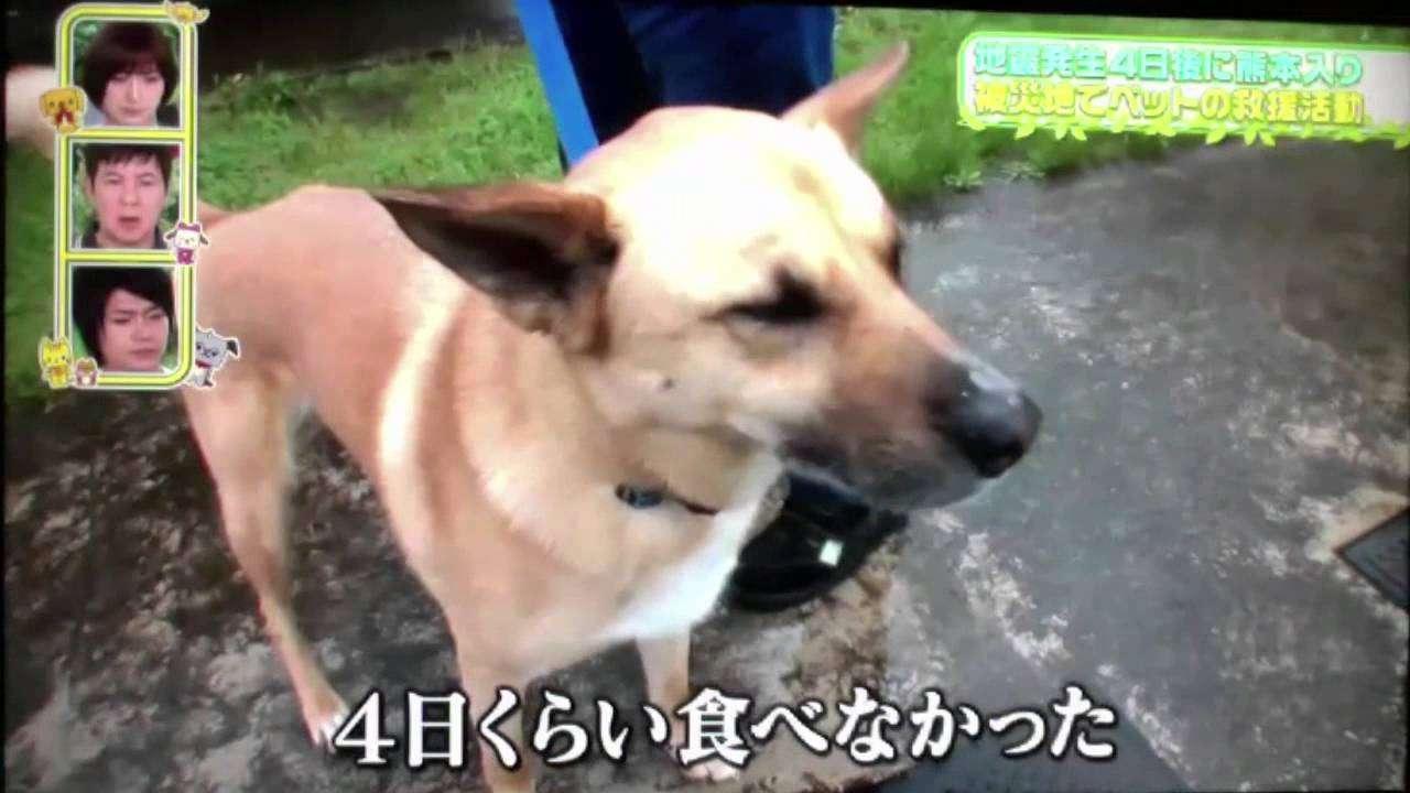 熊本地震/犬猫みなしご救援隊の活動【前編】『人材は財産』 中谷百合 - YouTube