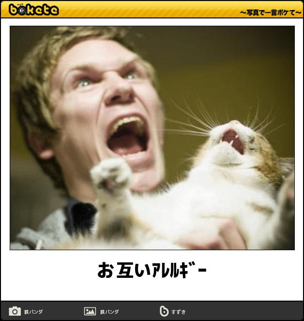 動物画像で話してみる。