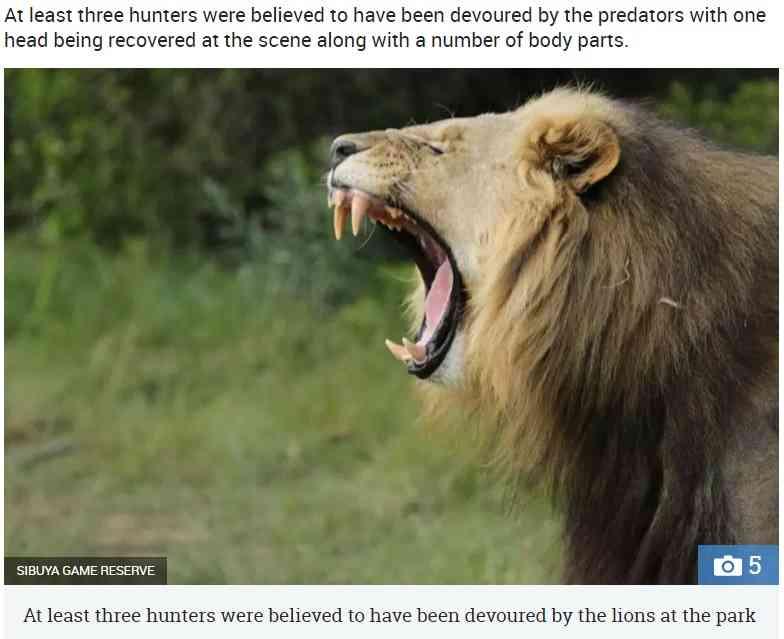 【海外発!Breaking News】サイを狙った密猟者ら、飢えたライオンの餌食に(南ア) | Techinsight(テックインサイト)|海外セレブ、国内エンタメのオンリーワンをお届けするニュースサイト