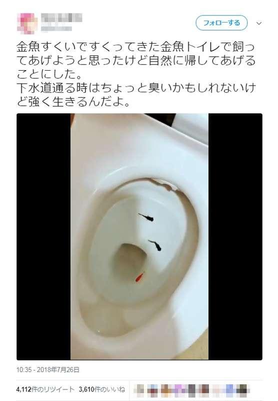 金魚をトイレに流して「自然に帰してあげる」 SNSに動画投稿し非難殺到|BIGLOBEニュース