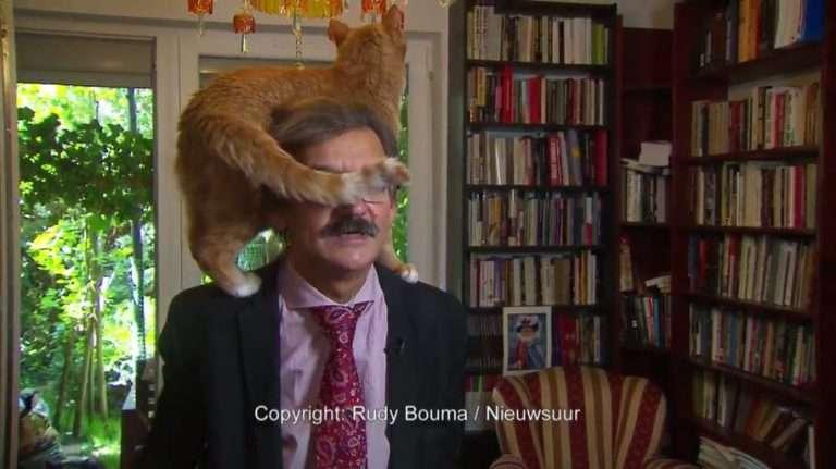 深刻な政治問題のTVインタビュー中、飼い猫まさかの乱入(ポーランド)<動画あり>