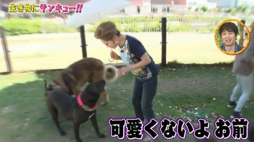 「犬好きとは思えない」デヴィ夫人、一般人の愛犬に暴言・暴力連発で炎上